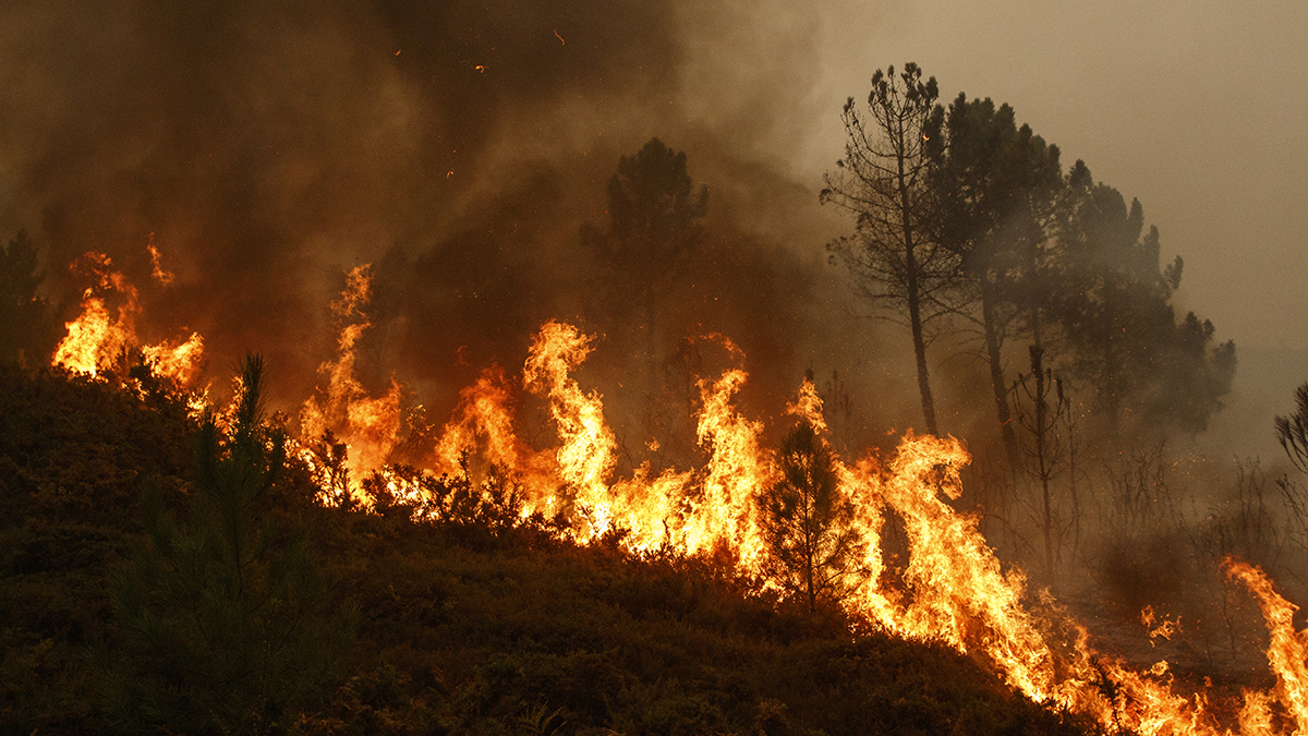 Report: Flatlanders Start Most Nevada County Fires