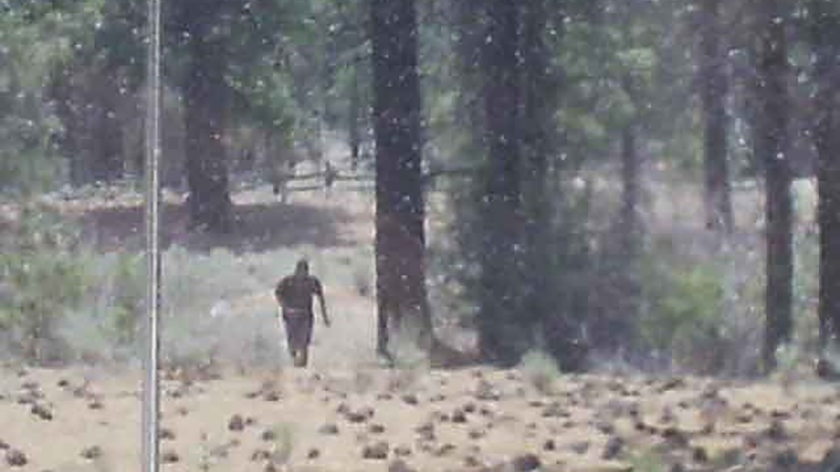 Grainy Photo taken by Mr. Bradenshauer which purportedly shows Bigfoot running away from him.