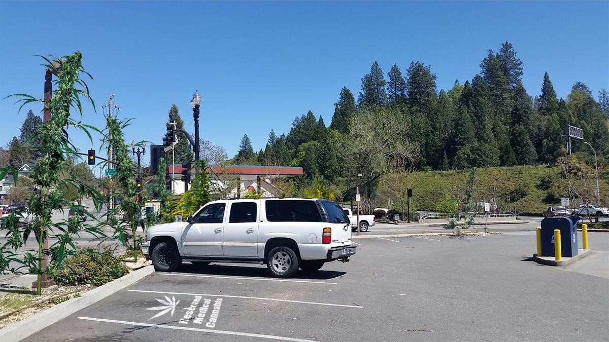 Grass Valley Post Office Replaces Missing Trees with Cannabis Plants
