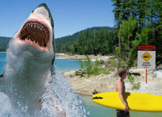 An area boy is lucky to be alive after a freak shark attack on an area lake.