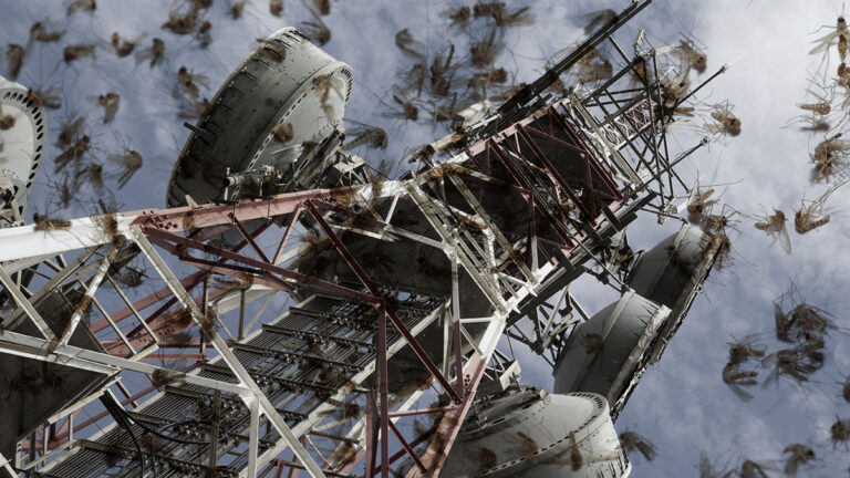 Study: Cell Towers Kill Zika And West Nile Virus Mosquitoes
