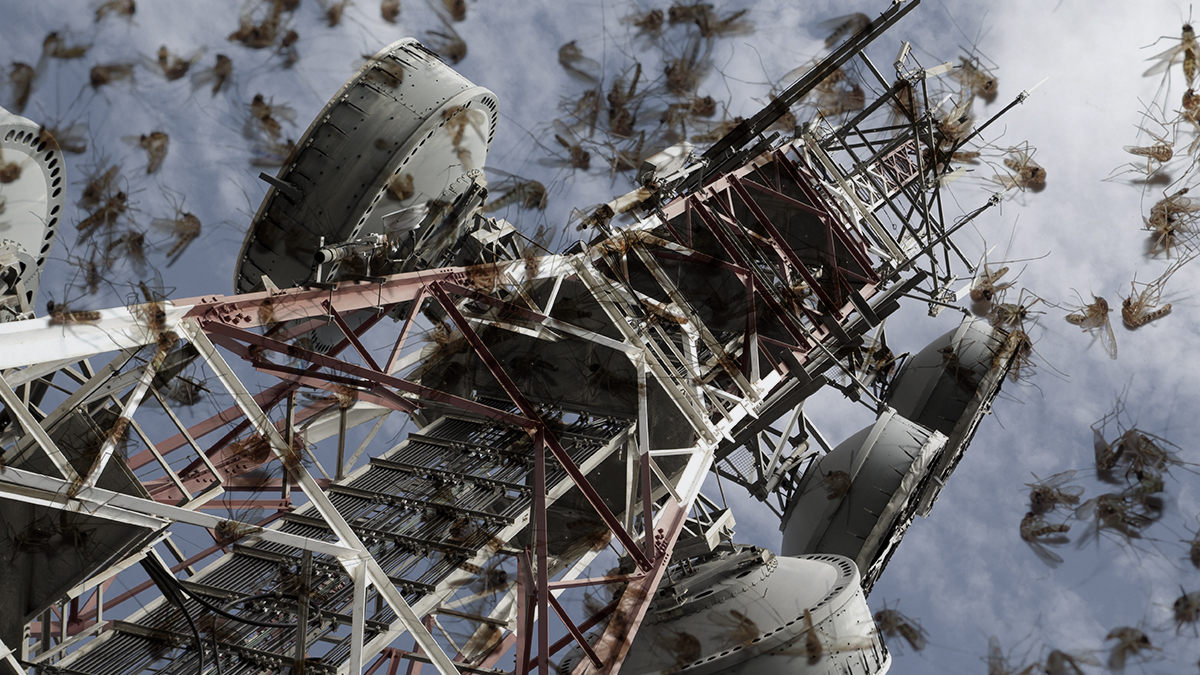 A massive new study has found that cell towers kill disease-laden mosquitoes.