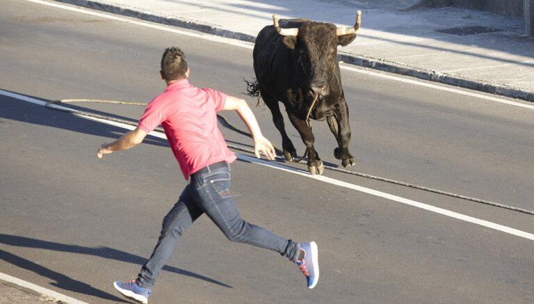 Pet Bull Terrorizes Downtown Grass Valley