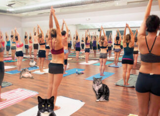 After receiving numerous threats from dogs owners, a local CO-OP has shut down all cat yoga sessions.