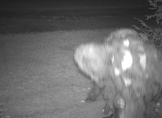 A critter cam caught what area amateur cryptozoologist Keith Bradenshauer claims is a werewolf.