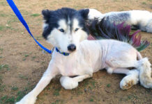 An area dog is recovering from what many are calling a tasteless act of cruelty.