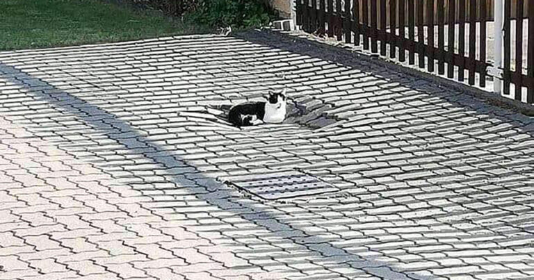 Area Cat Survives 24 Story Fall